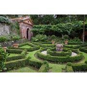 Ландшафтный дизайн садаблагоустройствоозеленение фото