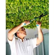 Благоустройство сада Уход за растениями. фото