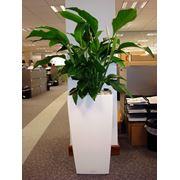 Озеленение офисов фото