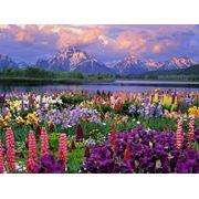 Цветники Создание клумб фото