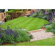 Подбор семян трав для газонов фото