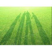 Снабжение газонов светом фото