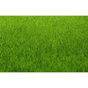 Снабжение газонов питательными веществами фото