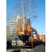 Посадки деревьев и кустарников фото