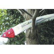 Обрезка плодовых и декоративных деревьев и кустарников фото