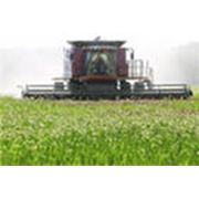 Стимулирование выращивания зерна фото