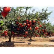 Биологическая защита растений в Казахстане фото