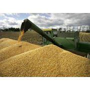 Экспорт зерна и муки фото