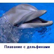Плавание с дельфинами фото