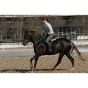 Лошади конкурные фото