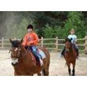 Курсы конной езды фото