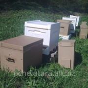 Пчелопакеты-2016, отводки фото