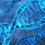 Криобанк Украина. Криосохранение образцов ДНК человека. фото