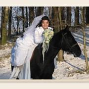 Услуги экипажа, прогулки на лошадях фото