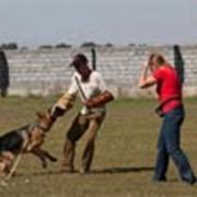 Дрессировка и воспитание собак, Подготовка собак для охраны объектов и личной охраны. фото
