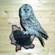 Изготовление чучел птиц фото