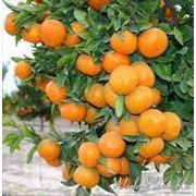 Плодовые растения фото