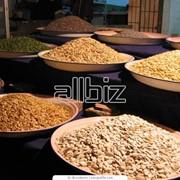 Оптовая торговля зерном фото