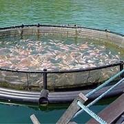 Садки для рыборазведения фото