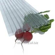 Сотовый поликарбонат( полигаль) 6мм прозрачный фото