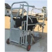 Механические станки для фиксации животных фото