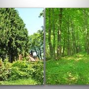 Рекреационный земельный участок пл. 13,3 га в Карпатах фото