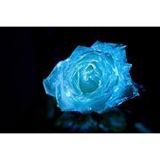 Краска светящаяся для цветов от Нокстон фото