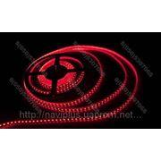LED лента SMD 3528, герметичная, 120 шт/м, красная фото