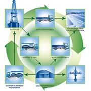 Экологическое направление фото