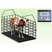Весы для животных Весы для КРС 1 тонна фото