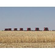 Продается аграрное хозяйство фото