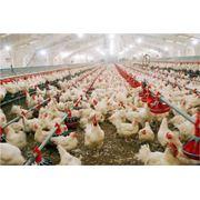 Ветеринарные препараты для птицы фото
