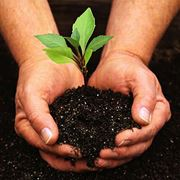 Участки земельные для садоводства фото