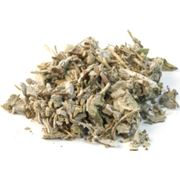 Листья шалфея алматы Шалфея лист резаный фото