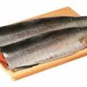 Рыба горбуша б/г фото