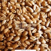 Анализ качества зерна фото