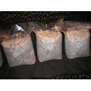 Мицелий грибной (вешенки) нк-18 и нк-35 фото