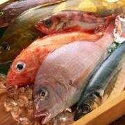 Рыба мороженая фото