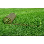 Травы газонные рулонные фото