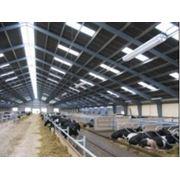 Хлевные технологий для выращивания крупного рогатого скота фото