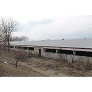 Ферма зоотехническая фото