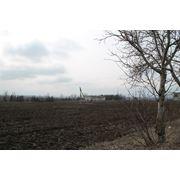 Ferma in Moldova фото
