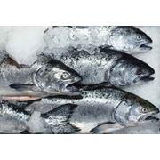 Рыбные изделий фото