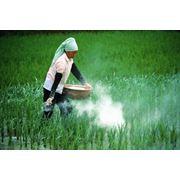 Оптовая торговля пестицидами фото