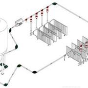 Система кормораздачи на свинокомплексе фото