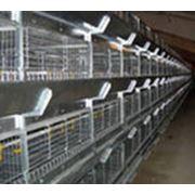 Оборудование клеточное для птицеводства Хельман комплект для содержания молодняка фото