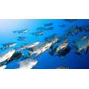 Биоресурсы водные фото