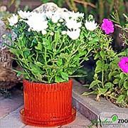 Горшок ШАРМ 12см красный с поддоном фото