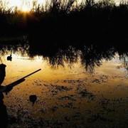 Организация охотничьих туров (Европа и Африка) фото