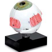 Модель глаза для ультразвуковой биометрии фото